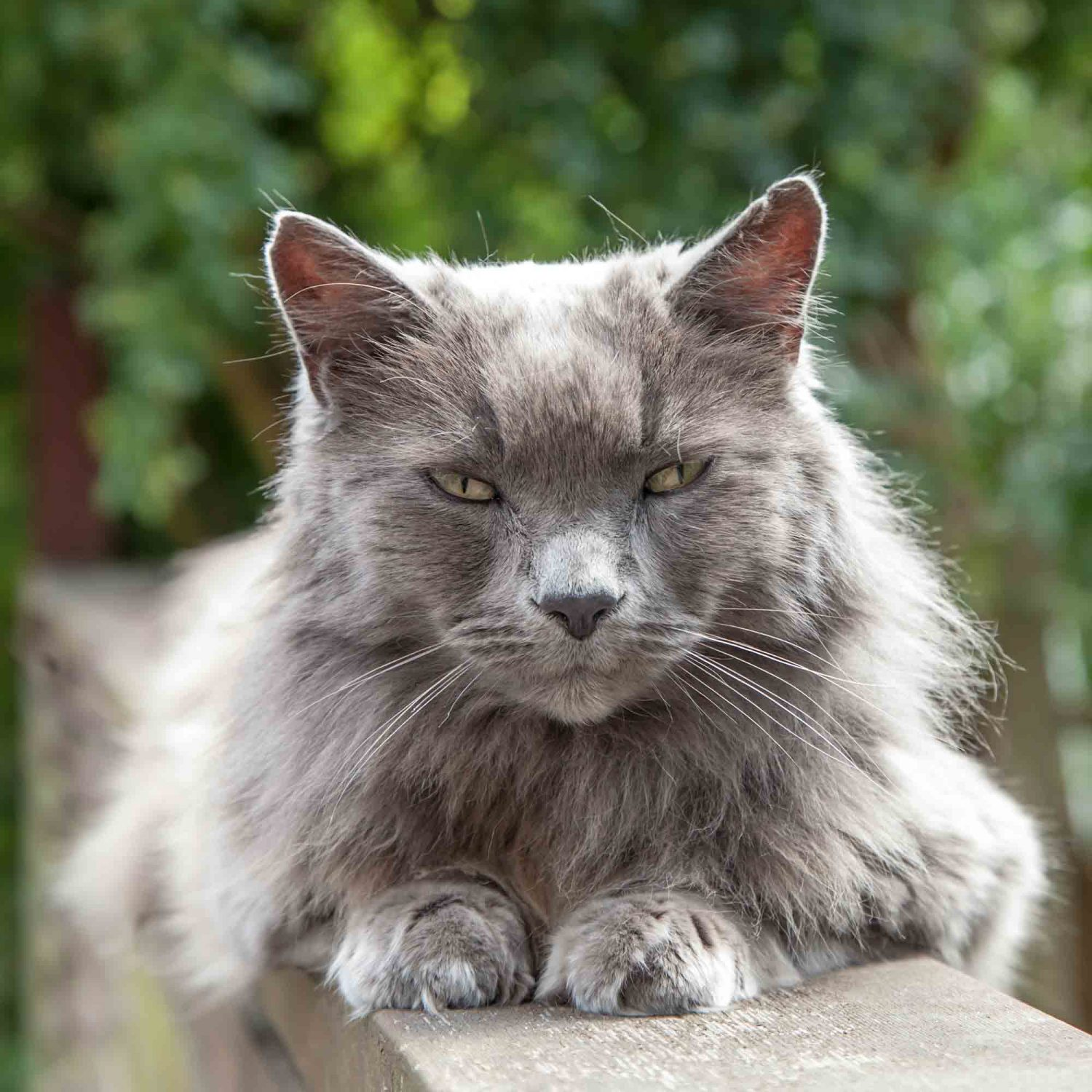 Proper senior cat care is vital to your aging cat