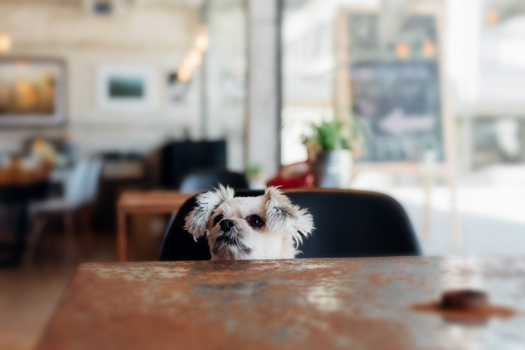 A dog peeking over the table
