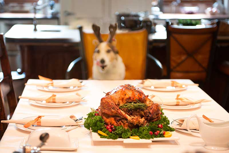 Avoid a pet emergency on Thanksgiving by knowing pet food safety