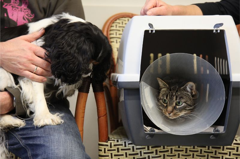 A dog meeting a cat in its carrier