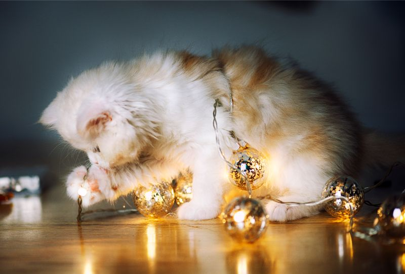 Cat wrapped up with Christmas lights and playing