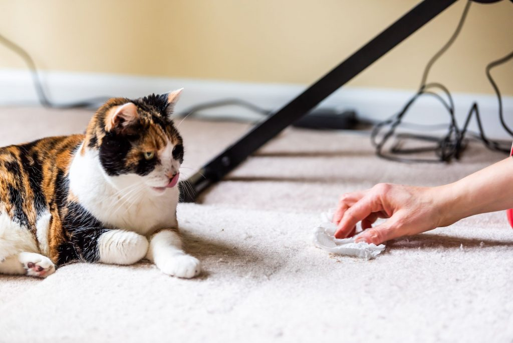 A person cleans up after a cat hairball.
