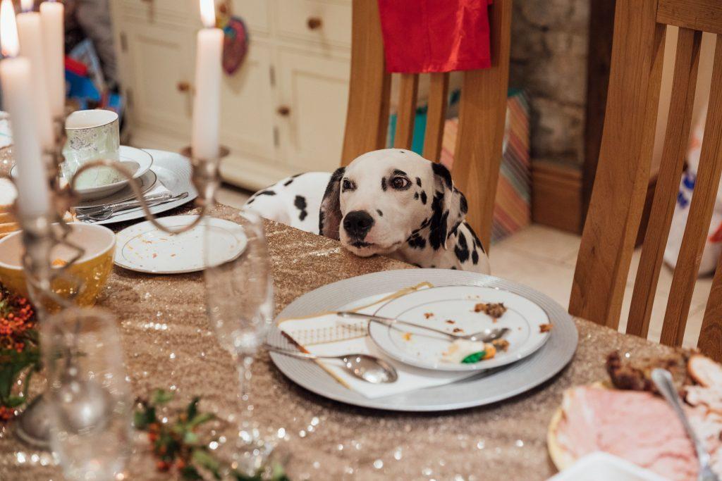 Dog at holiday table.